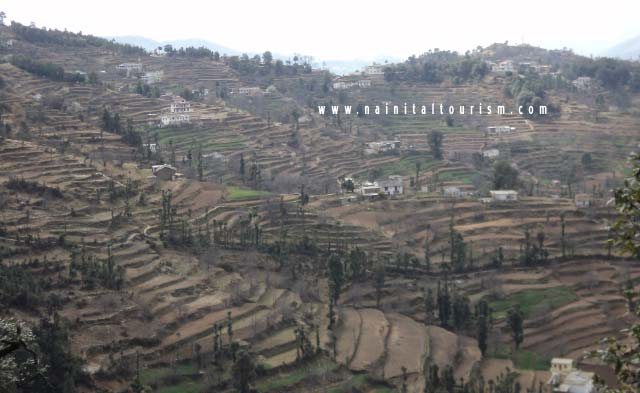 Buy Himalayan View Land in Mukteshwar