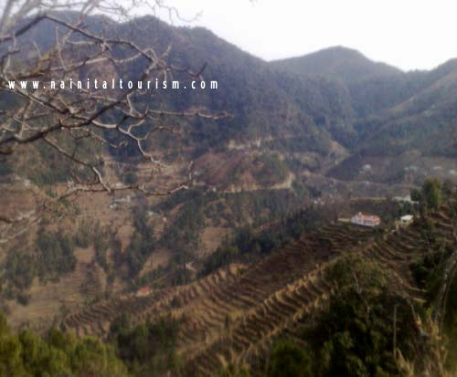 Green Fields from Ramgarh