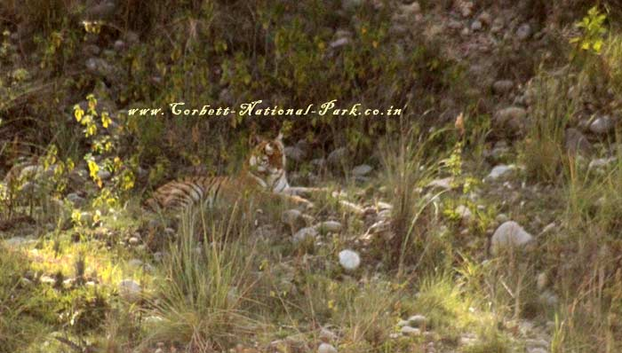 Corbett National Park is regarded as the heaven for Tigers
