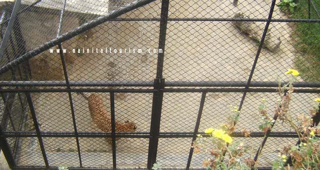 HIGH ALTITUDE ZOO NAINITAL